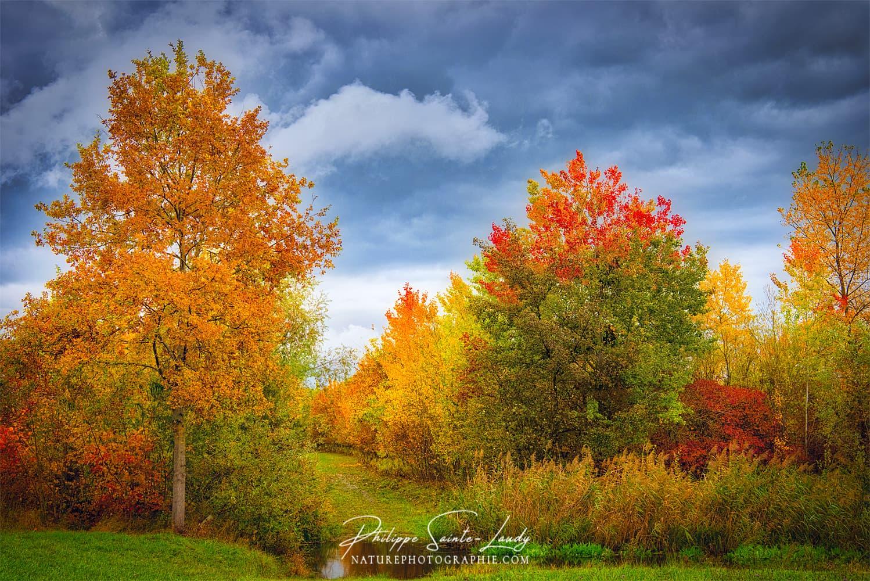 Ciel menaçant sur une forêt en automne