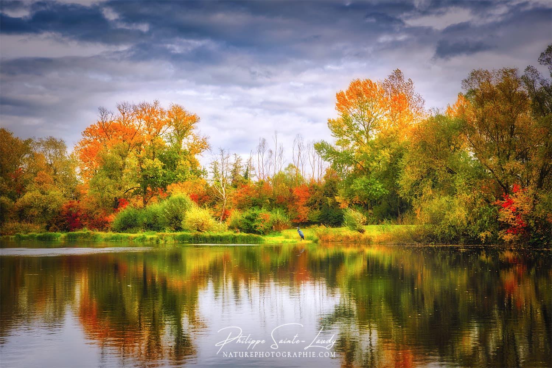 Forêt en automne qui se reflète dans l'eau