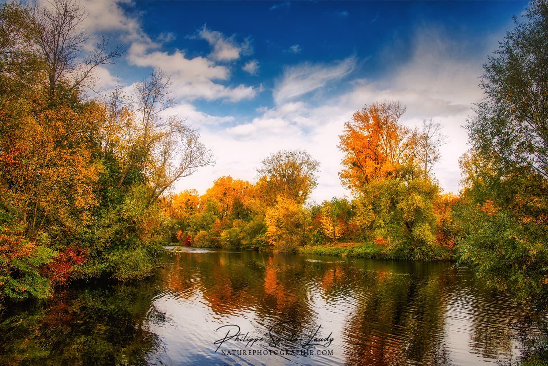 Forêt d'automne le long de l'eau