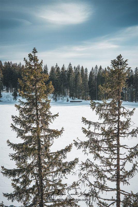 Sapins au bord d'un lac gelé