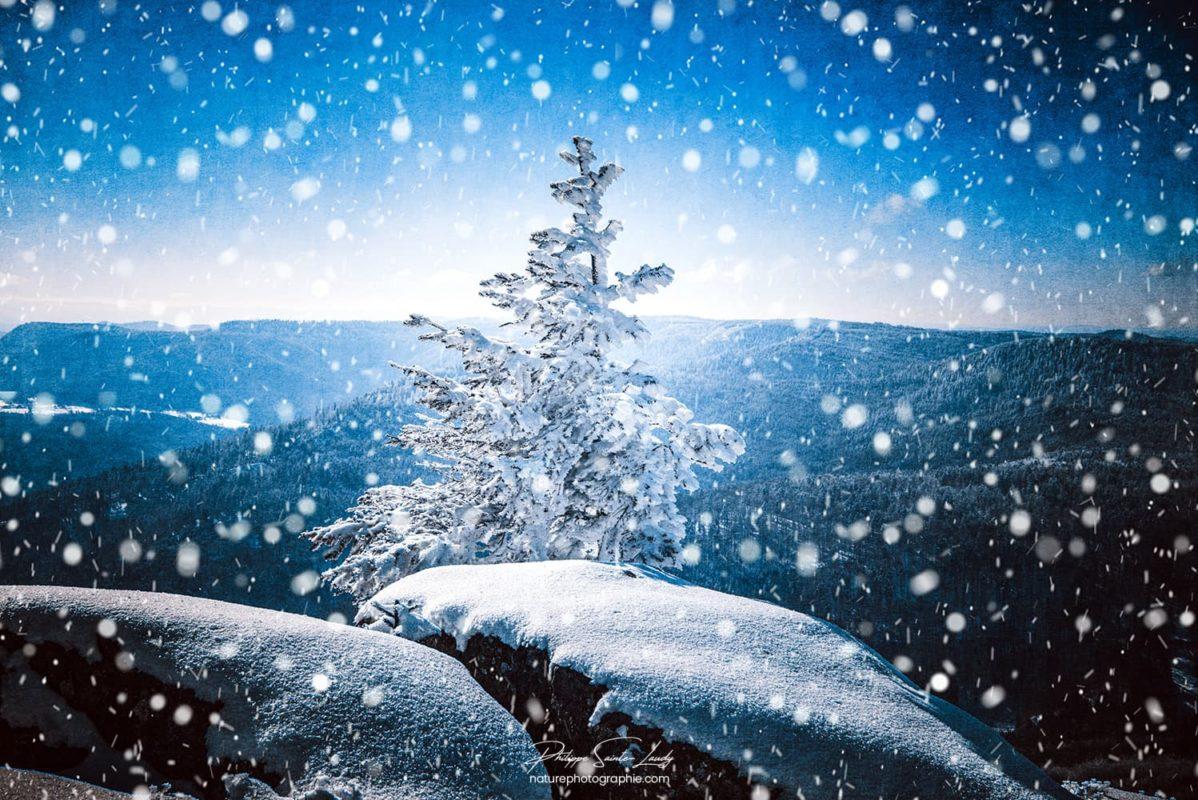 Un sapin sous la neige
