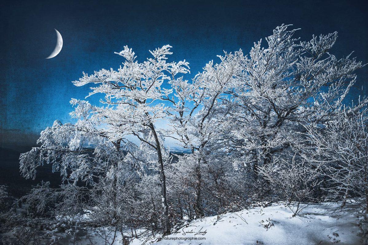 Arbres enneigés et lune en hiver