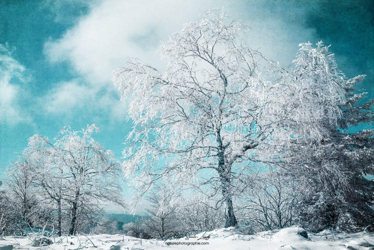 Photo d'un arbre en hiver avec texture photo