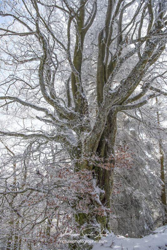 Le gel recouvre les arbres