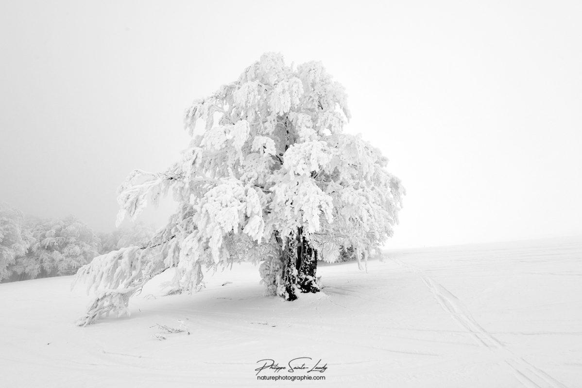 Un arbre recouvert de neige