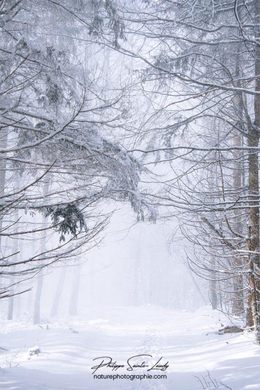 Chemin forestier dans la neige