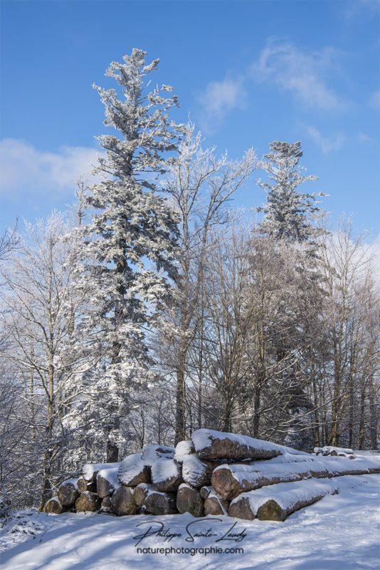 Billes de bois en hiver