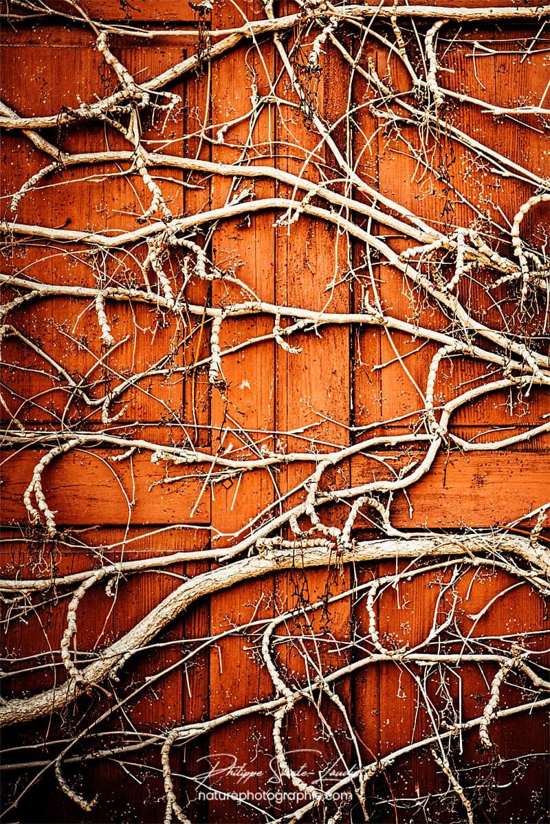 Racine sur volet en bois