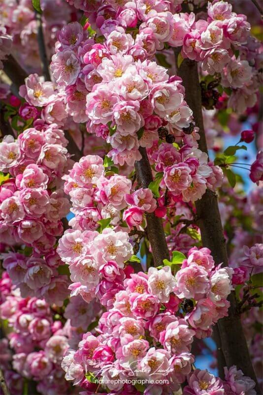 Bouquet de fleurs au printemps