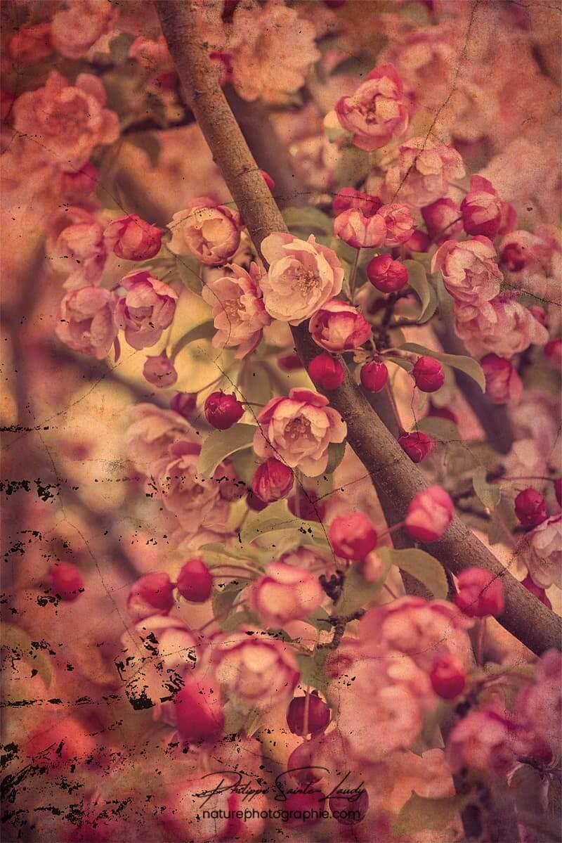 Texture photo sur un pommier du Japon