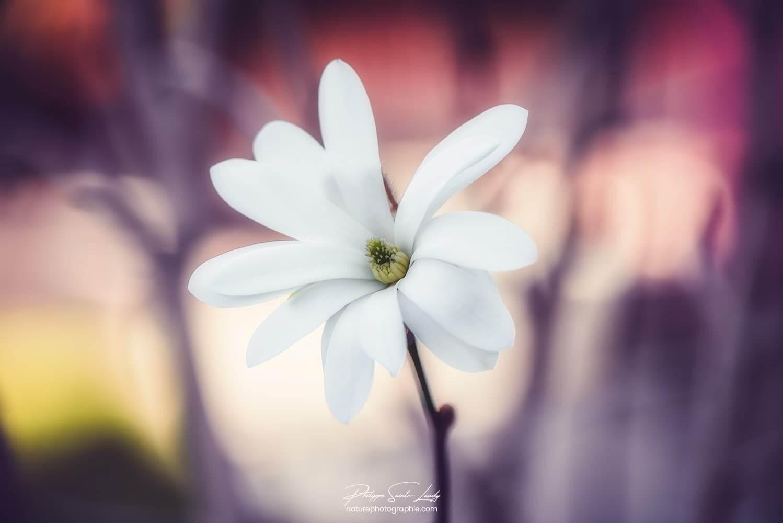 Une fleur au printemps