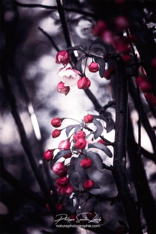Fleurs rouges fond gris