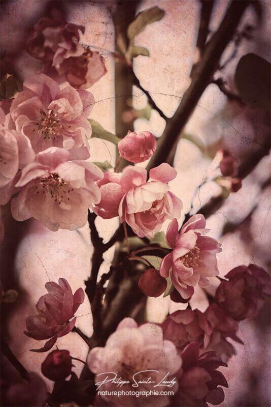 Traitement vintage sur photo de fleurs