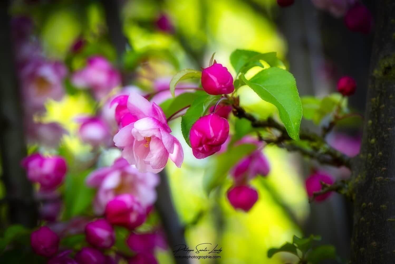 Fleurs roses et rouges