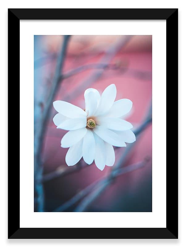Photo encadrée d'un magnolia blanc