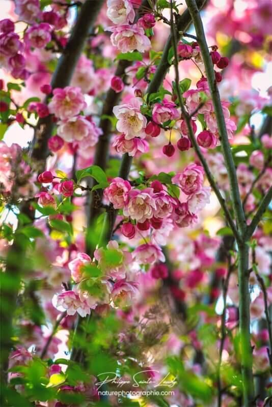 Nature au printemps