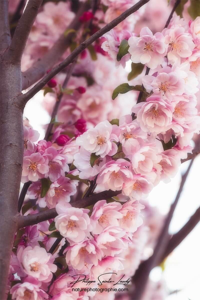 Branches chargées de fleurs