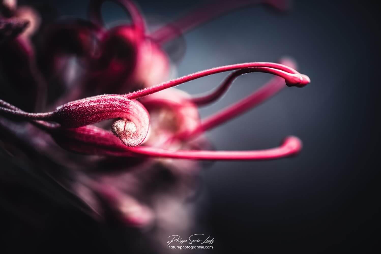 Pistil rouge