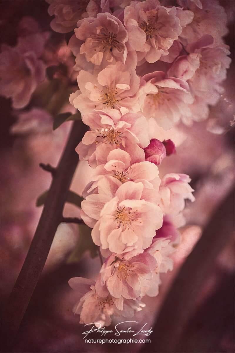 Traitement vintage sur photo de fleur
