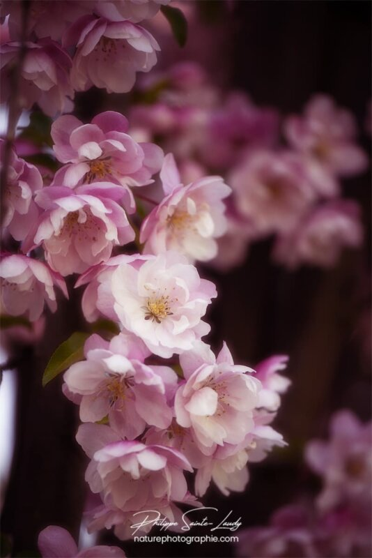 Effet Orton sur des fleurs