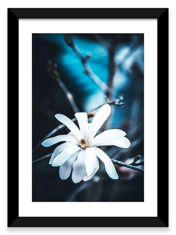 Un cadre pour un magnolia