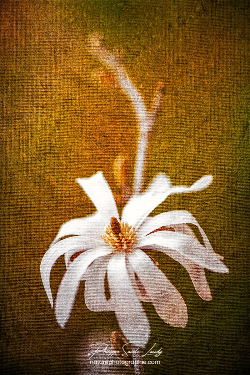 Magnolia avec une texture photo