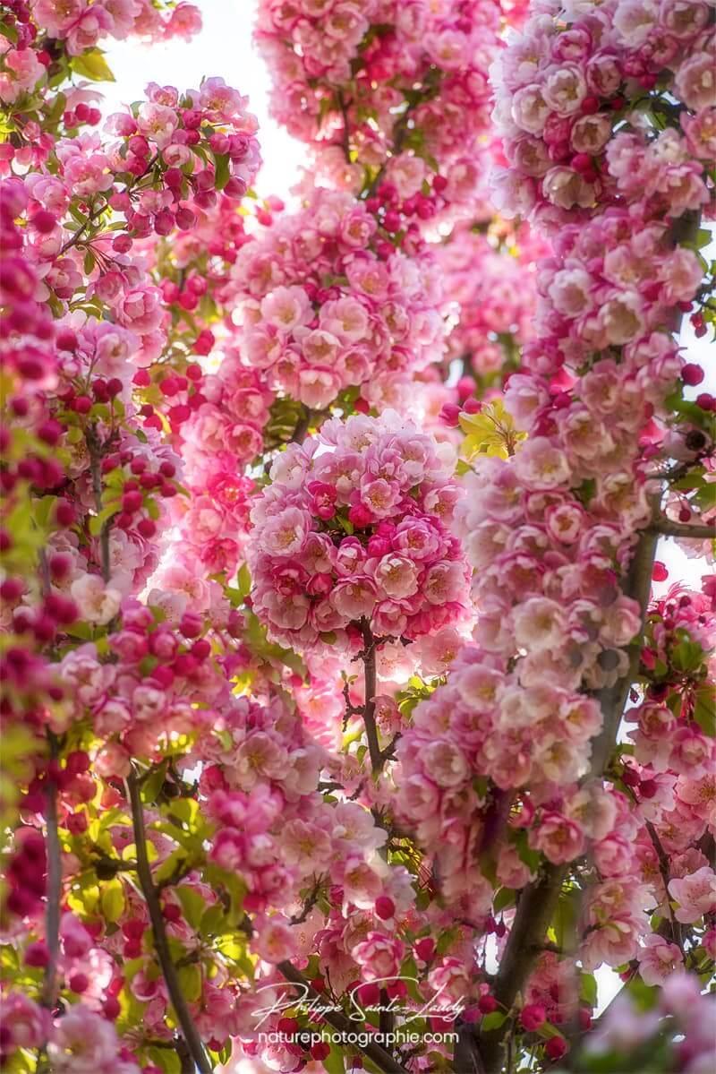 Bouquet rond de fleurs du Japon