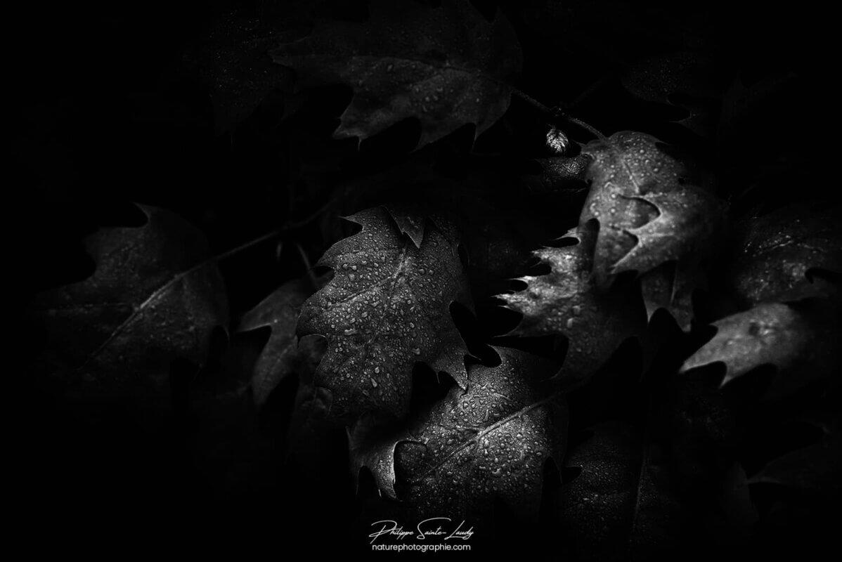 Ambiance sombre sur feuille en automne