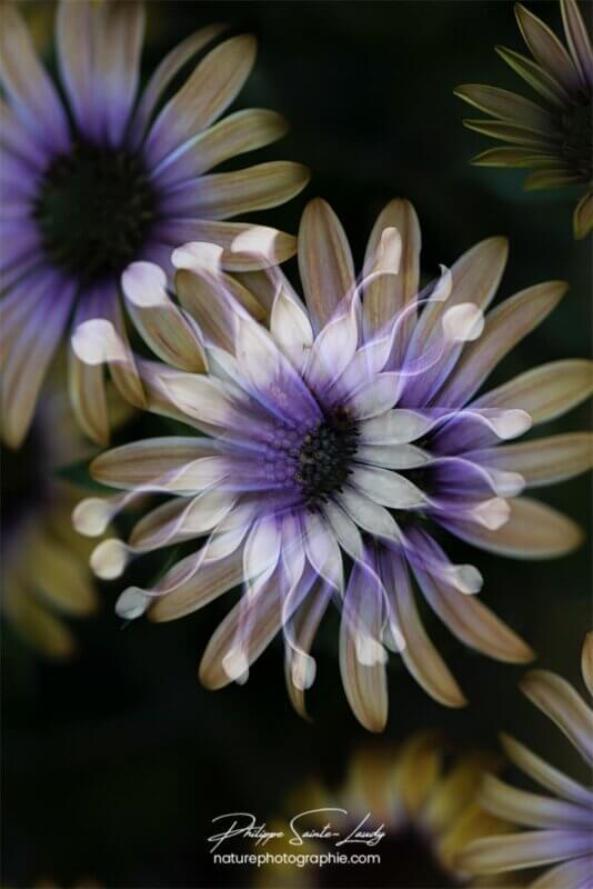 Fleurs en négatif