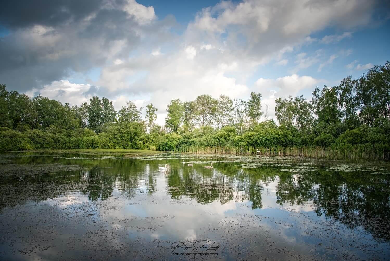Une forêt, un lac, un reflet…