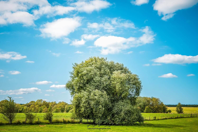Un arbre en pleine campagne