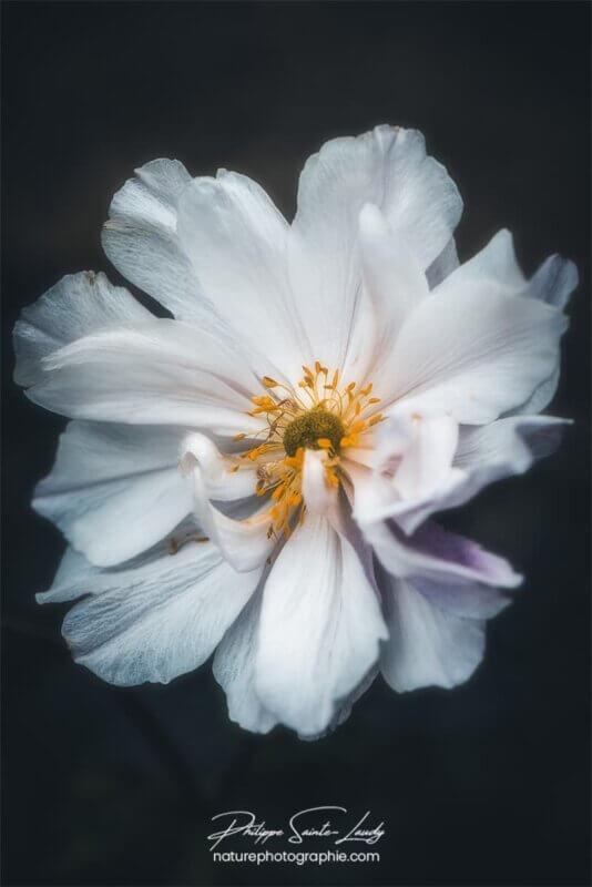 Macro photo de fleur