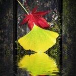 Reflet de feuilles